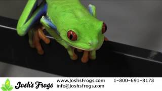 Tree Frogs as Pets