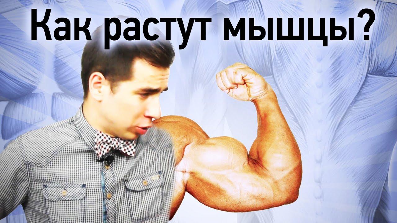 Как сделать так чтобы мышцы росли сами