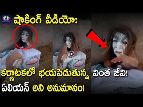 Alien Shocking Video Hulchal In Kerala - Karnataka Border || Telugu Full Screen