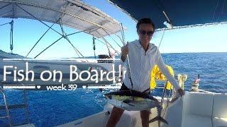 Fish on Board! by Sailing JAEKA, week, 39