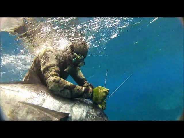 Spearfishing Ulua on Oahu, Hawaii