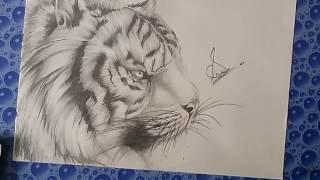 How to draw Pencil drawing (video no.1 ); TIGER SKETCH (Made by shubham raj singh)