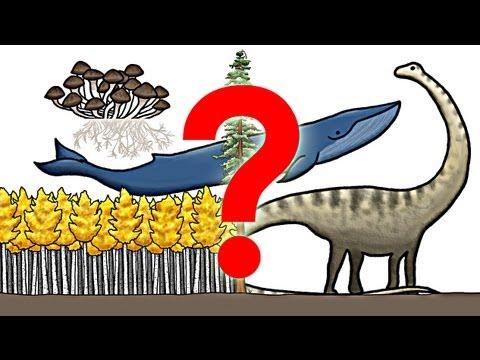 Jaký je největší organismus na světě?