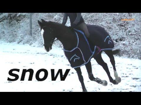 Schwarzes Pferd Reiten The Snow Schwarzes Pferd
