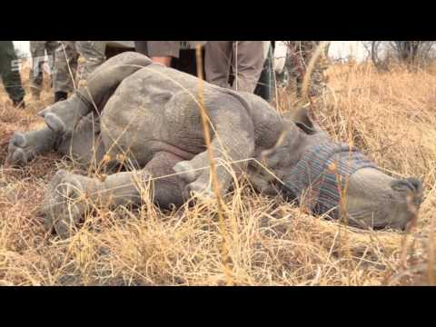 Fight against rhino poaching in South Africa
