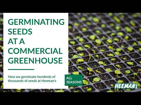 Germinating Seeds at a Commercial Greenhouse