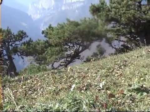 Псебай. гора Бамбак, откуда открывается широкая панорама Кавказских гор. Caucasus Bambak