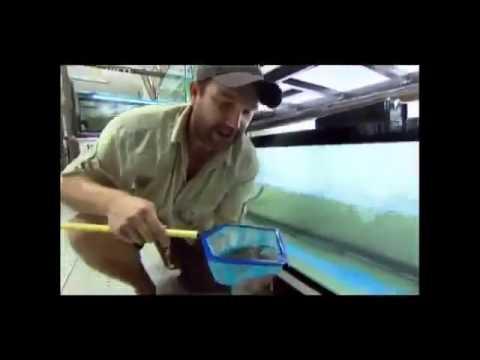 Canavar Balıklar - Siyam Cenneti - - Türkçe Dublaj Belgesel
