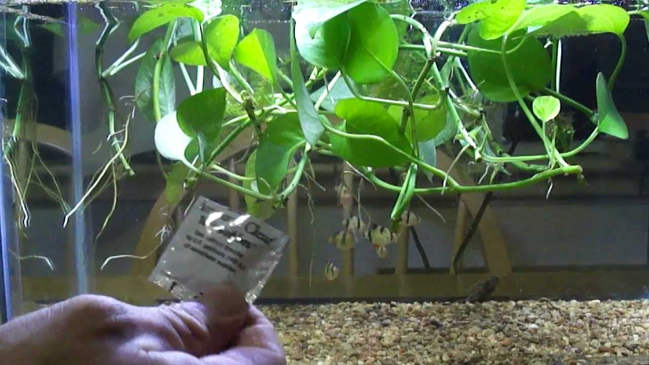 Prepare water to water houseplants natural fertilizer for house plants youtube - Indoor water plants list ...