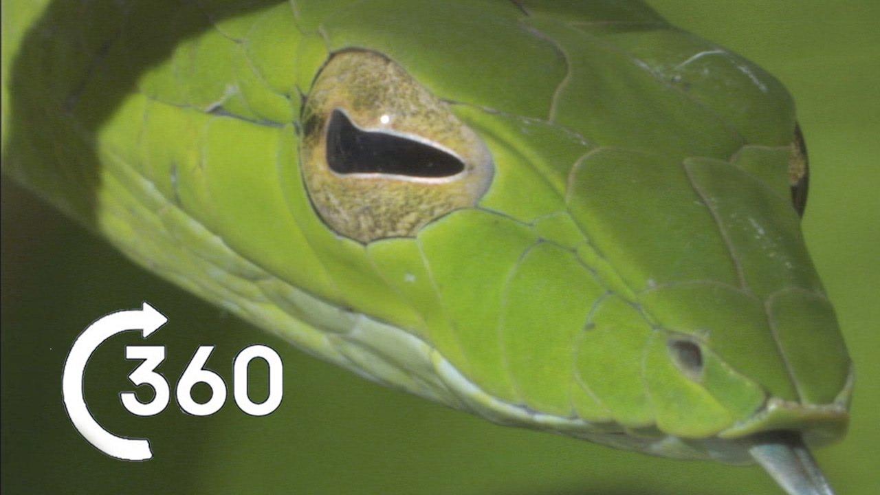 Costa Rican Jungle 360°-PLANET EARTHⅡ