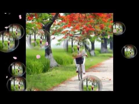 Nỗi Buồn Hoa Phượng - Đàm Vĩnh Hưng video
