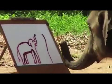 Невероятно! Слон рисует автопортрет хоботом