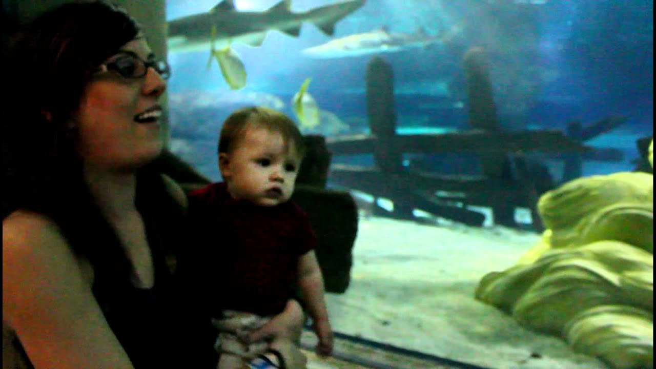 the mall of america destroying life Sea life minnesota aquarium in mall of america® near minneapolis is a family oriented tourist attraction which includes seahorses, sharks, rays & much more.
