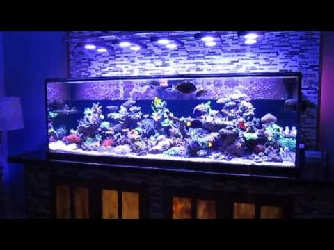 90635011224415079 further 55gal with Oscar Cichlids 2 Plecostimus algae eater additionally Keith weber furthermore New Setup On My 55 Gal Tang Tank 737 moreover tropicalfishforum   forumdisplay. on oscar cichlids in 55 gal tank