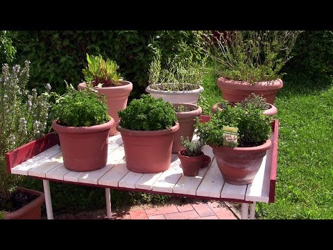 KRÄUTER KANN JEDER! Part 1: Auspflanzen & Kräutertisch bauen, Film 48
