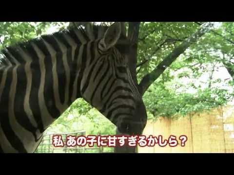 シマウマの赤ちゃん(王子動物園)