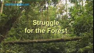 Struggle for the Forests - the Kubu, Sumatra
