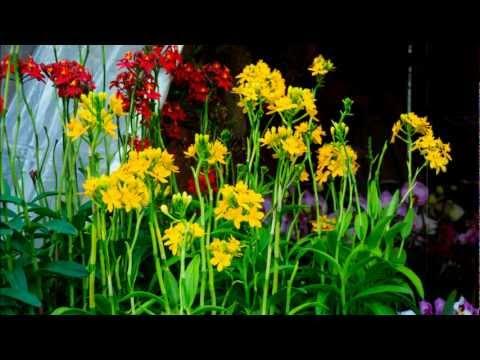 Cho hoa tet xuan quy ty 2013