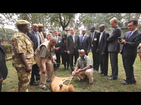 UN Secretary-General Ban Ki-moon Adopts a Lion Cub at the Nairobi National Park