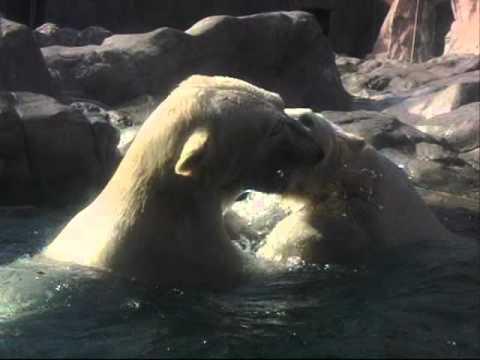 水中のバトル (八木山動物公園) 【HS210】