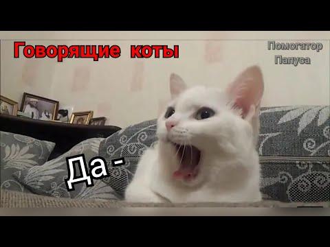 Говорящие коты! Озвучка! Лучшая подборка №4  (внимание! 18+)