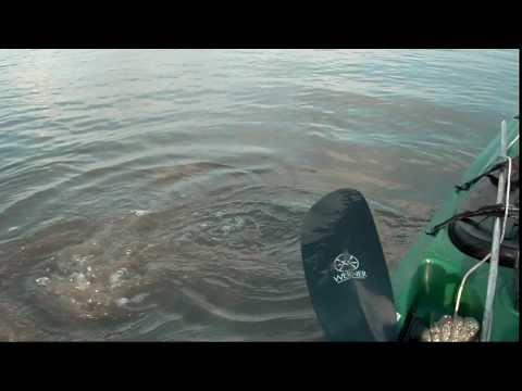 Fish On!  Kayaking for Redfish in the Marsh