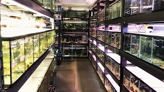Massive African Cichlid Store & Hatchery - Something Fishy Tour 2018