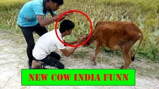 Funny cow - cow attack on people funny video-Bst full fun 2018