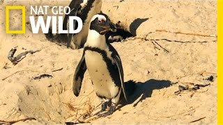 Penguin Crime Spree | South Africa