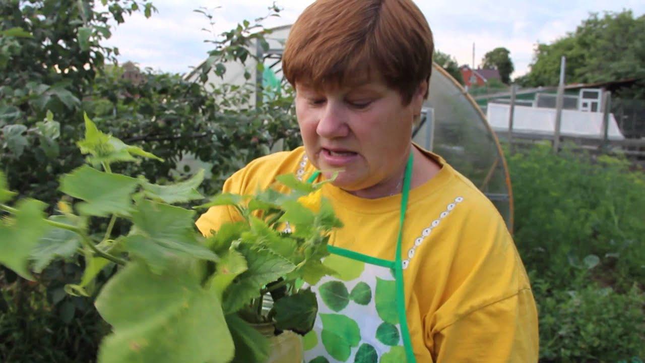 Юля миняева сад и огород видео новое 2018 ютуб32