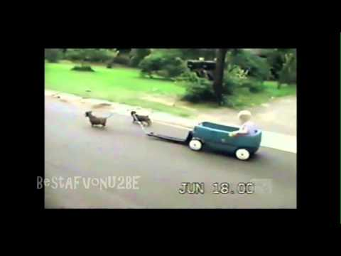 AFV Part 108 America's Funniest Home Videos 2012