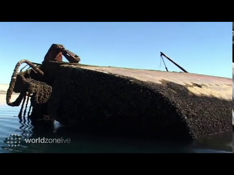 Chubut Puerto Madryn buceo con lobos marinos