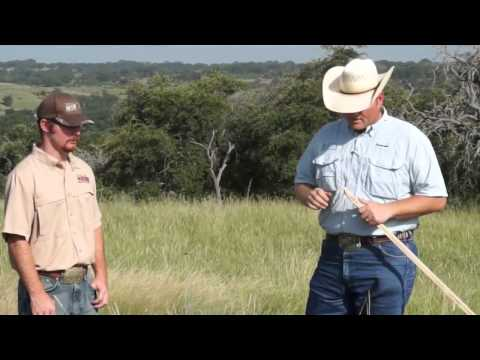 Managing Cattle for Quail Habitat 1
