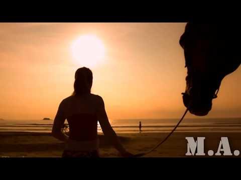 Motivációs videó lovasoknak