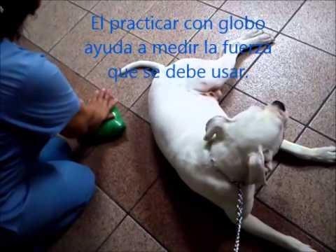 Resucitación cardiopulmonar perro