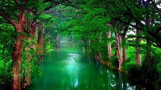 Nature relaxating music I Sleep music,calm music,medetation music