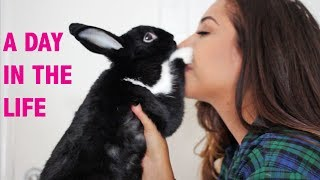 A Day in the Life of a Bunny Mom