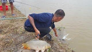 Câu cá giải trí được toàn trắm và chép khủng | Fishing Big