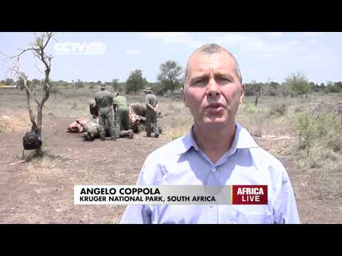SA Defence Force joins active anti-poaching initiatives