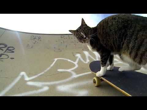 GoPro: Didga the Skateboarding Cat