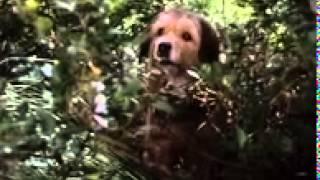 Benji the Hunted 1987 Full Movie YouTube