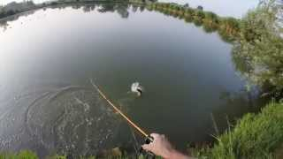 Top Water Frog Fishing For Black Bass (GoPro HD)