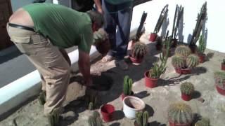 Diseño de jardines: Jardín de cactus