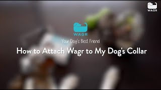 Getting started with Wagr #3 - Attach the Wagr tracker to your dog's collar