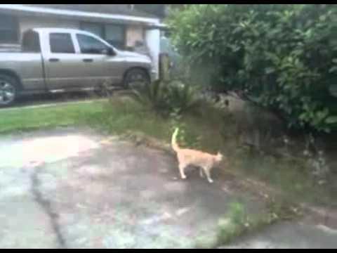 Gatos - Un pájaro molestando a un gatito que luego...