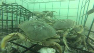 GoPro in a Crab Pot