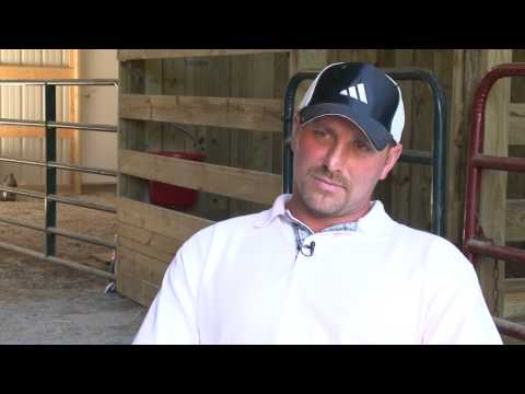 Tennessee Walking Horse Abuse