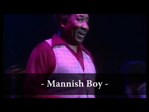 Muddy Waters - Mannish Boy (Live At Rockpalast)