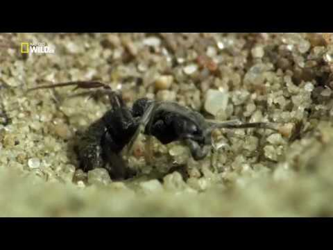 Удивительные насекомые.Incredible Insects HDTVRip