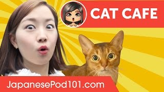 Cat Cafe in Japan ? Adventure with Risa!